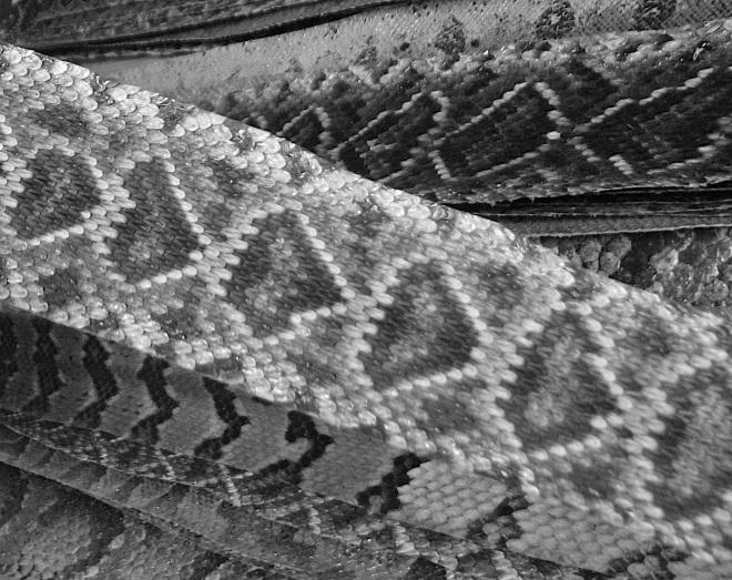 Hoofer-snakeskins-B&W